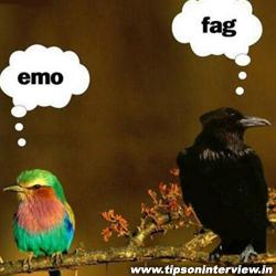 Funniest Birds Photos