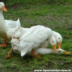 Funniest Ducks Photos