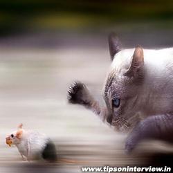 Funny Cats Photos