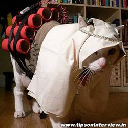 Funny Cats Pics