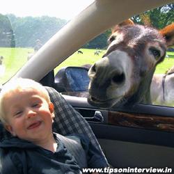 Funny Donkeys Picks