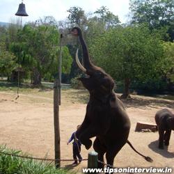 Funny Elephants Pic