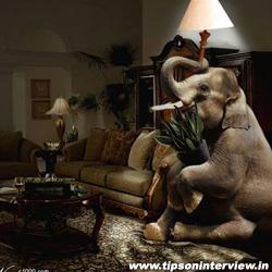Funny Elephants Pics