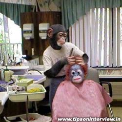 Funny Monkeys Photos