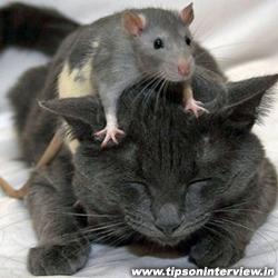 Funny Rats Pics