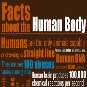 Amazing facts on Human Body
