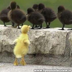 Funniest Ducks Picks