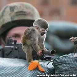 Funniest Monkeys Photos