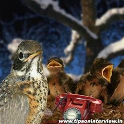 Funny Birds Video Clips