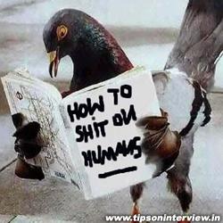 Funny Birds Pics