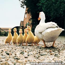 Funny Ducks Photos