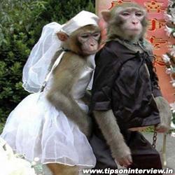 Funny Monkeys Images