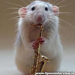 Funny Rats Photos